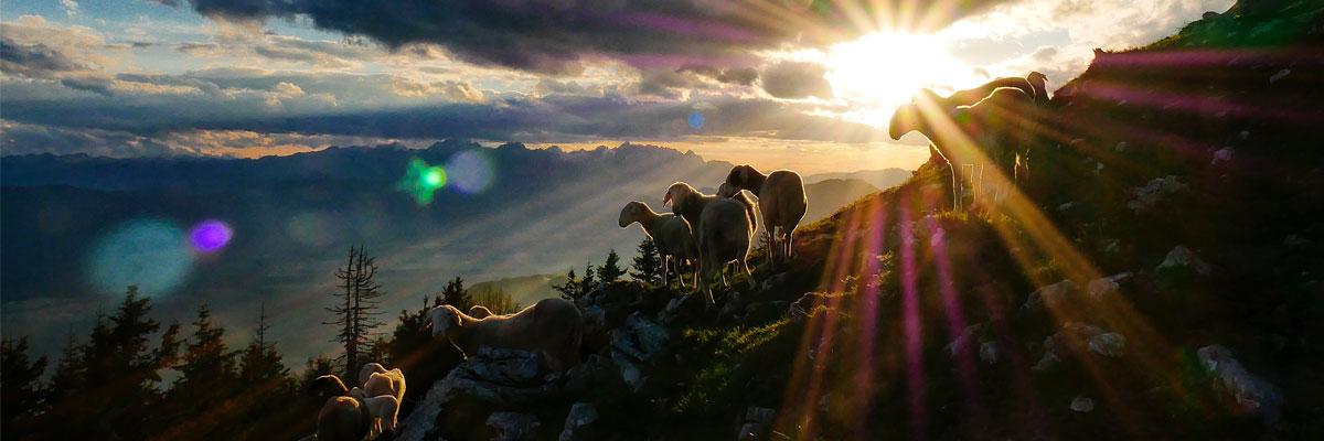 « Ils étaient comme des brebis sans berger » (Mc 6, 30-34)