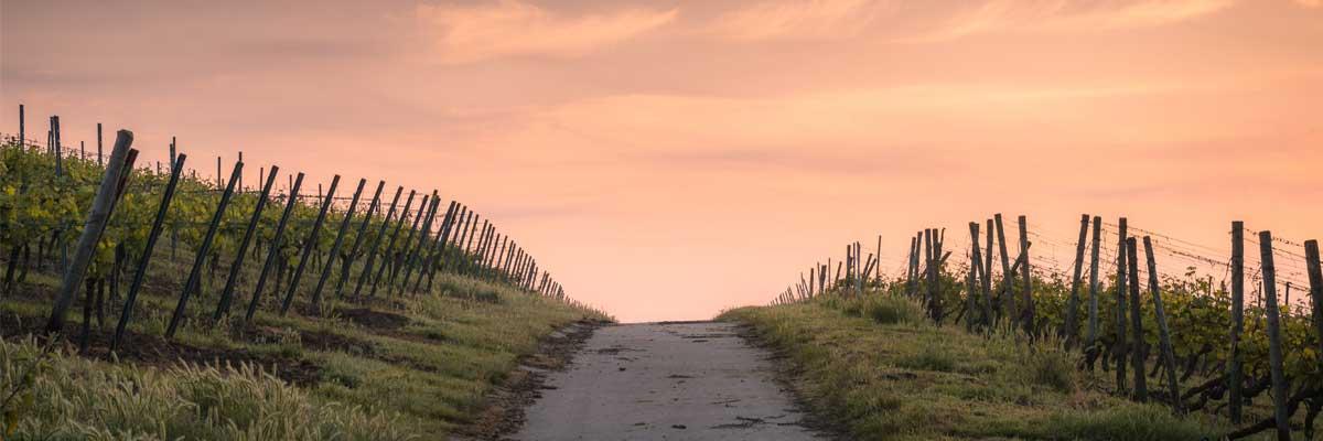 « Je te suivrai partout où tu iras »